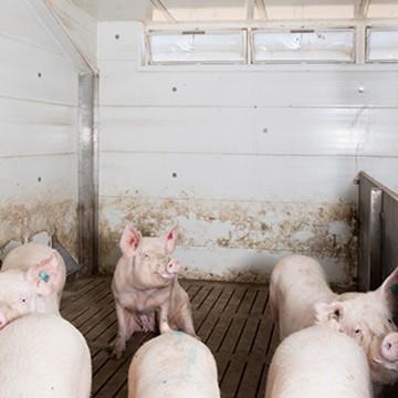 Creagh Concrete 2438mm Pig & Sheep Slats