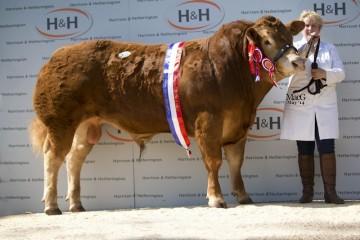 Elite Pedigree Genetics Foxhillfarm Impecabull