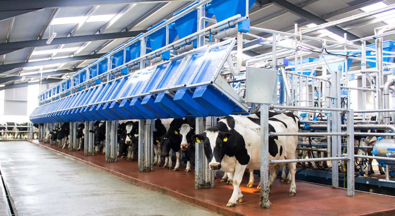 Dairymaster Swiftflo Fast Exit Parlour