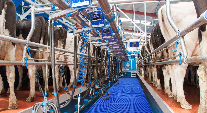 Dairymaster Swiftflo Swing Parlour
