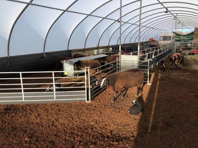 Weanlings, Sheep & Calf (WSC) Bed