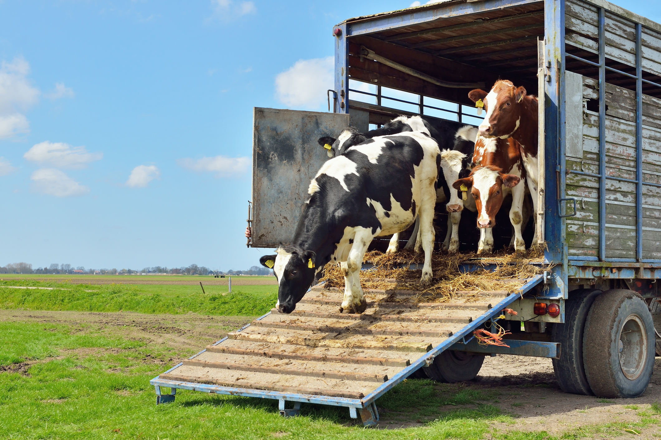 Top Maintenance Tips for Livestock Trailers | Farm Compare