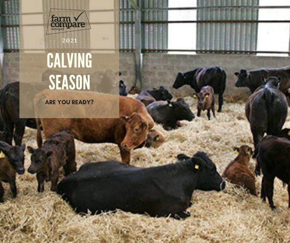 calving season,