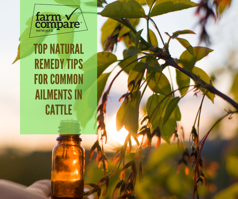 Top natural remedy tips for common ailments in cattle