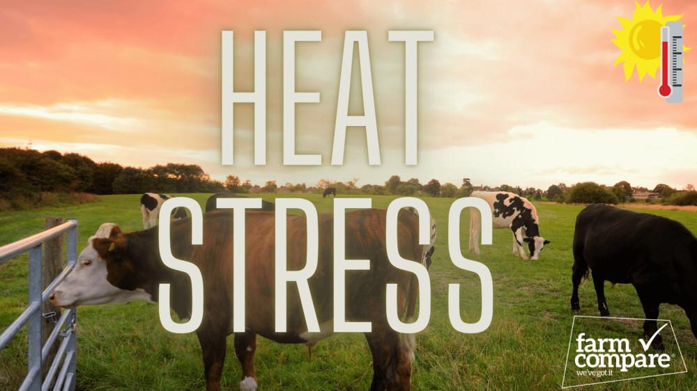 How to prevent heat stress in livestock | Farm Compare